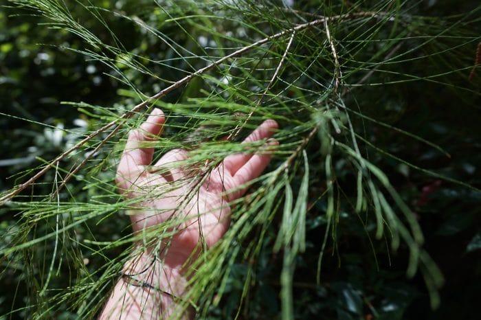hand touching plants