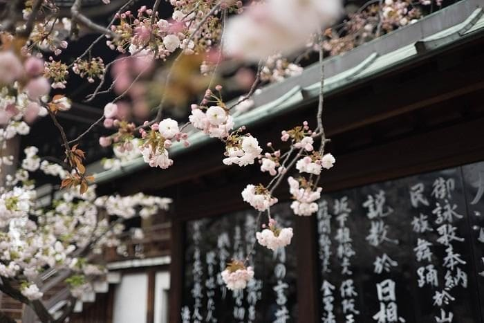 white cherry blossom tree over Asian-style roof