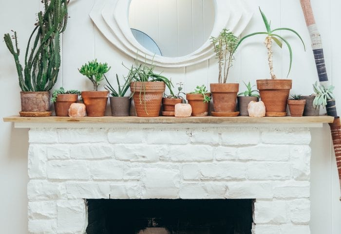 potted plants on mantlepiece